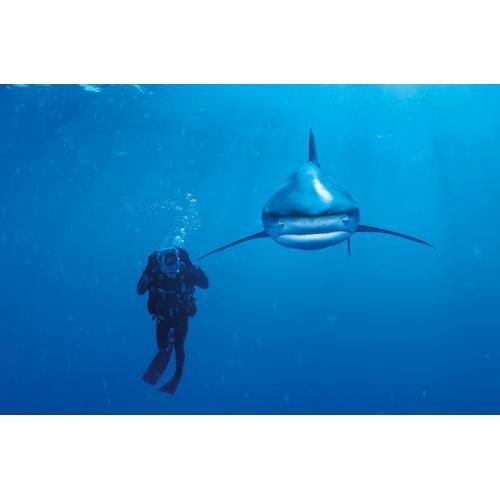 Clementoni - 39303 Whitetip Shark Puzzle